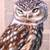 'Perching Owl' - Signed Painting of a Perched Owl from Bali (image 2b) thumbail