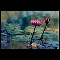 'Pink Lotus' peace photograph