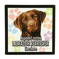 Spoiled Chocolate  - Chocolate Lab Flexible Fridge Magnet