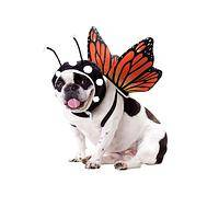 Floating Wings - Butterfly Wings Pet Costume by Animal Planet