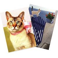 A Pawsitively Happy Birthday - Feline Photography Birthday Cards (Set of 6)