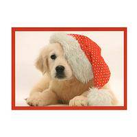 Santa's Cutest Helper - Sweet Puppy in a Santa Hat Christmas Cards (Box of 15)