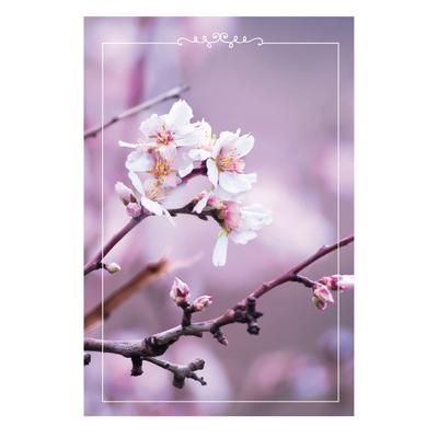 The Beginning of Spring Card Set - Unicef Card Set