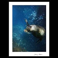 'Tell Me Your Secret' - Galapagos Sea Lion Secrets colour Photograph Art