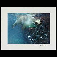 'Water's Delight' - Galapagos Sea Lion Bubbles Color Photograph
