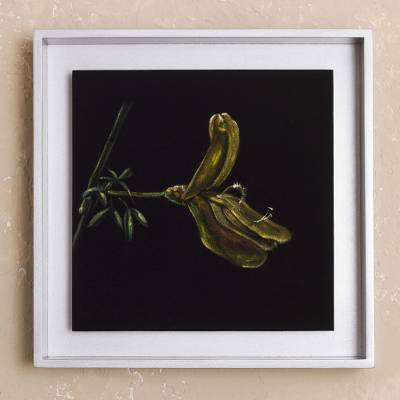 'Scotch Broom' - Framed Painting of a Scotch Broom Flower from Peru