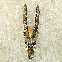African wood mask, 'Barewa' - Hand Carved Sese Wood Horned Antelope Mask from Ghana