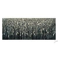 'Corn Field' - Black and White Mounted Photograph of Mexican Corn Field
