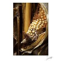 'Our Heritage' - Mexican Corn Cob Color Photograph on Foam Core