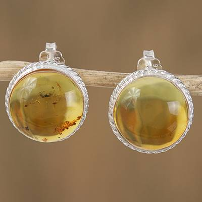 Amber button earrings, 'Round Gold' - Handmade Natural Amber Button Earrings from Mexico
