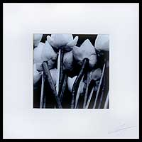 'Lotus Bunch in Black and White' - Black and white photograph on Fujicolor crystal archive pape