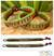 Beaded wristband bracelets, 'Kiwi Coins' (pair) - Beaded wristband bracelets (Pair) thumbail