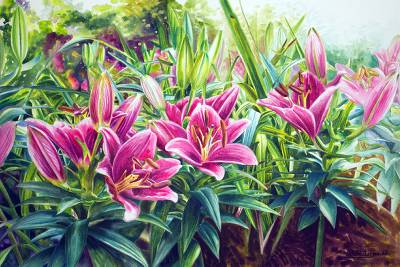 'Morning of Lilies'