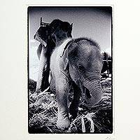 'My name is Nong Ying' - Thai Black and White Baby Elephant Photo