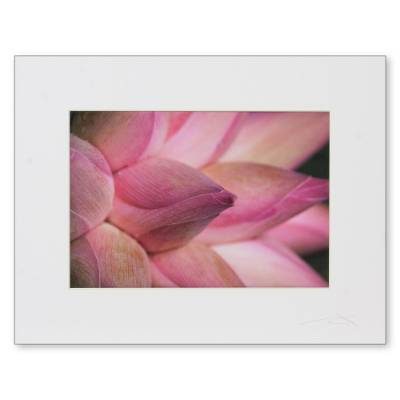 'Lotus Offerings' - Color Photography Closeup Print of Pink Lotus Buds