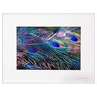'Splendour' - Peacock Feather Color Photograph in Card Stock Mat
