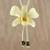 Natural flower lariat necklace, 'Exotic Cream Bloom' - Handmade Natural Orchid Flower Long Lariat Necklace thumbail