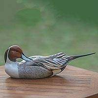Wood statuette, 'Posing Pintail Duck'