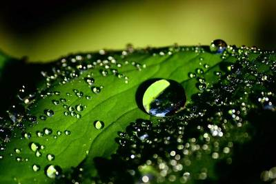 'Drops of Water on Leaf'