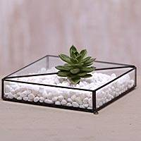 Glass and brass terrarium, 'Garden Desire' - Handmade Javanese Glass and Brass Plant Terrarium