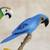 Wood decorative accents, 'Delightful Parrots' (set of 5) - Wood Parrot Decorative Accents from Brazil (Set of 5) (image 2c) thumbail