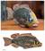 Wood sculpture, 'African Odaa Fish' - Artisan Crafted African Fish Sculpture (image 2) thumbail