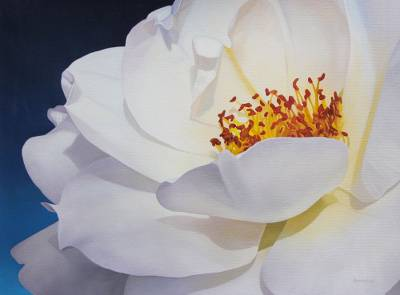 'Illuminated Corolla' - Signed Oil Painting of a White Rose