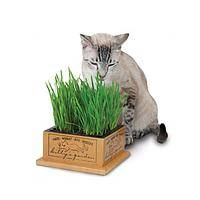 Tender Nibbles - Live Green Grass Cat Garden