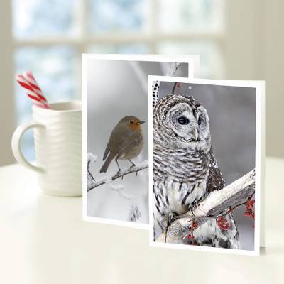 UNICEF holiday greeting cards, 'The Birds of Christmas' (set of 10) - UNICEF The Birds of Christmas Holiday Cards (Set of 10)