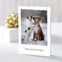 UNICEF holiday greeting cards, 'Comfort & Joy' (set of 10) - UNICEF Dog Themed Holiday Cards (Set of 10)