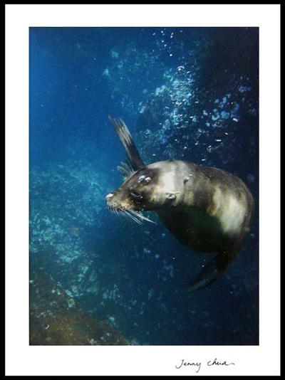 'Tell Me Your Secret' - Galapagos Sea Lion Secrets colour Photograph Art