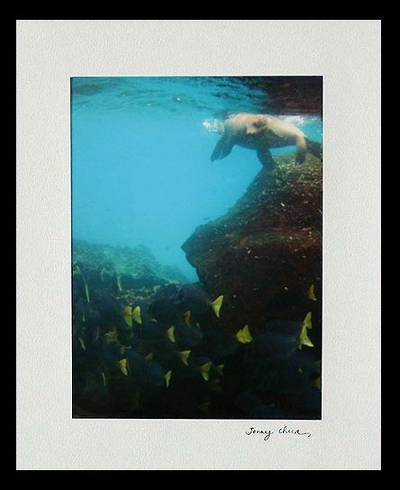 Sea Lion And Yellow Tail Fish Color Photograph