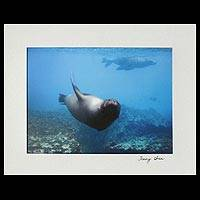 'Upside Down World' - Swirling Sea Lion Color Photograph