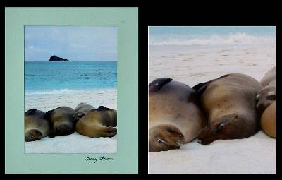 'Cuddling By Your Side' - Paper Sea Life Photography Print
