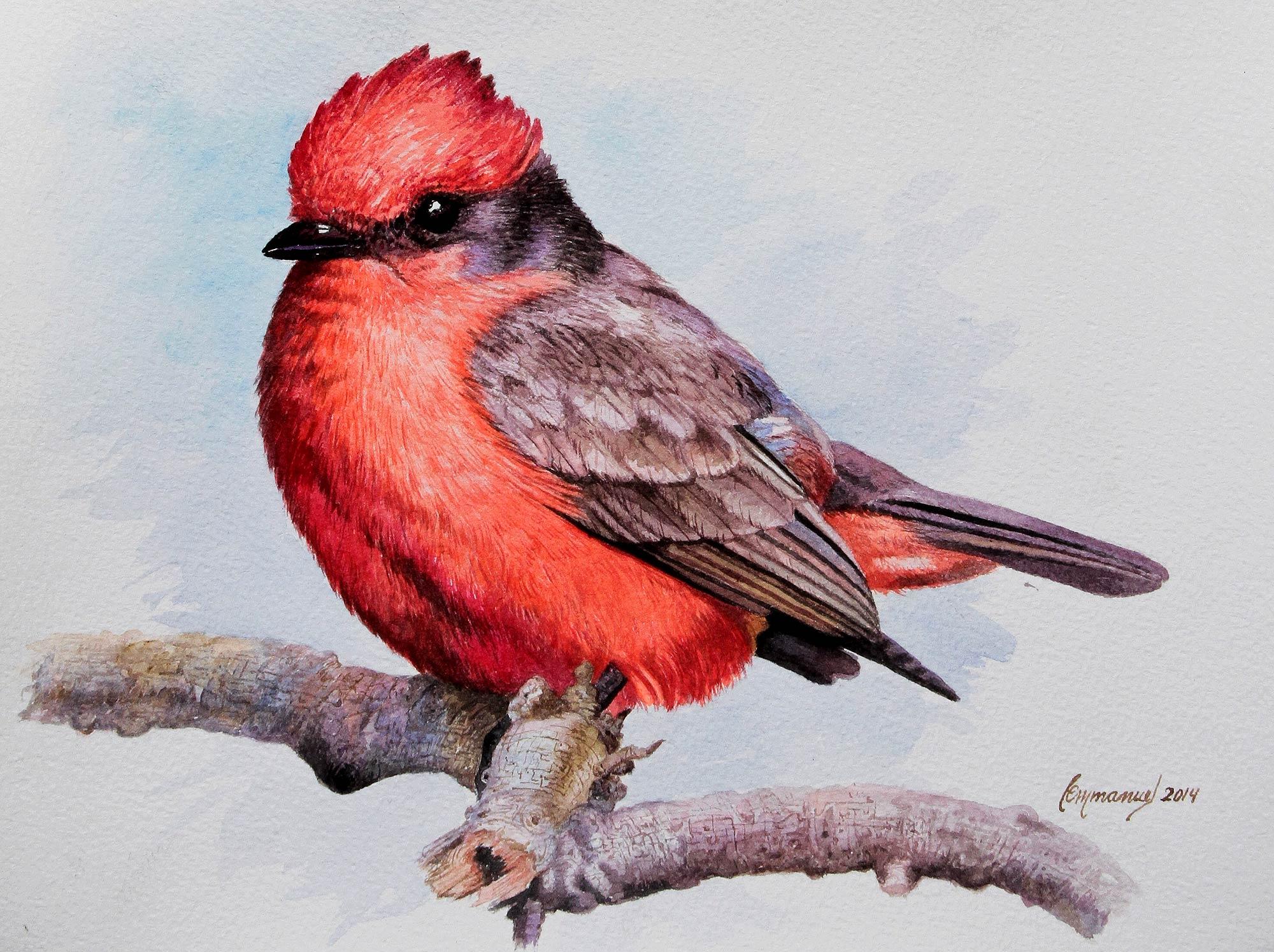 original cardinal bird realistic painting from peru red cardinal