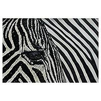 'Zebra II' - Peruvian Black and White Realist Zebra Painting