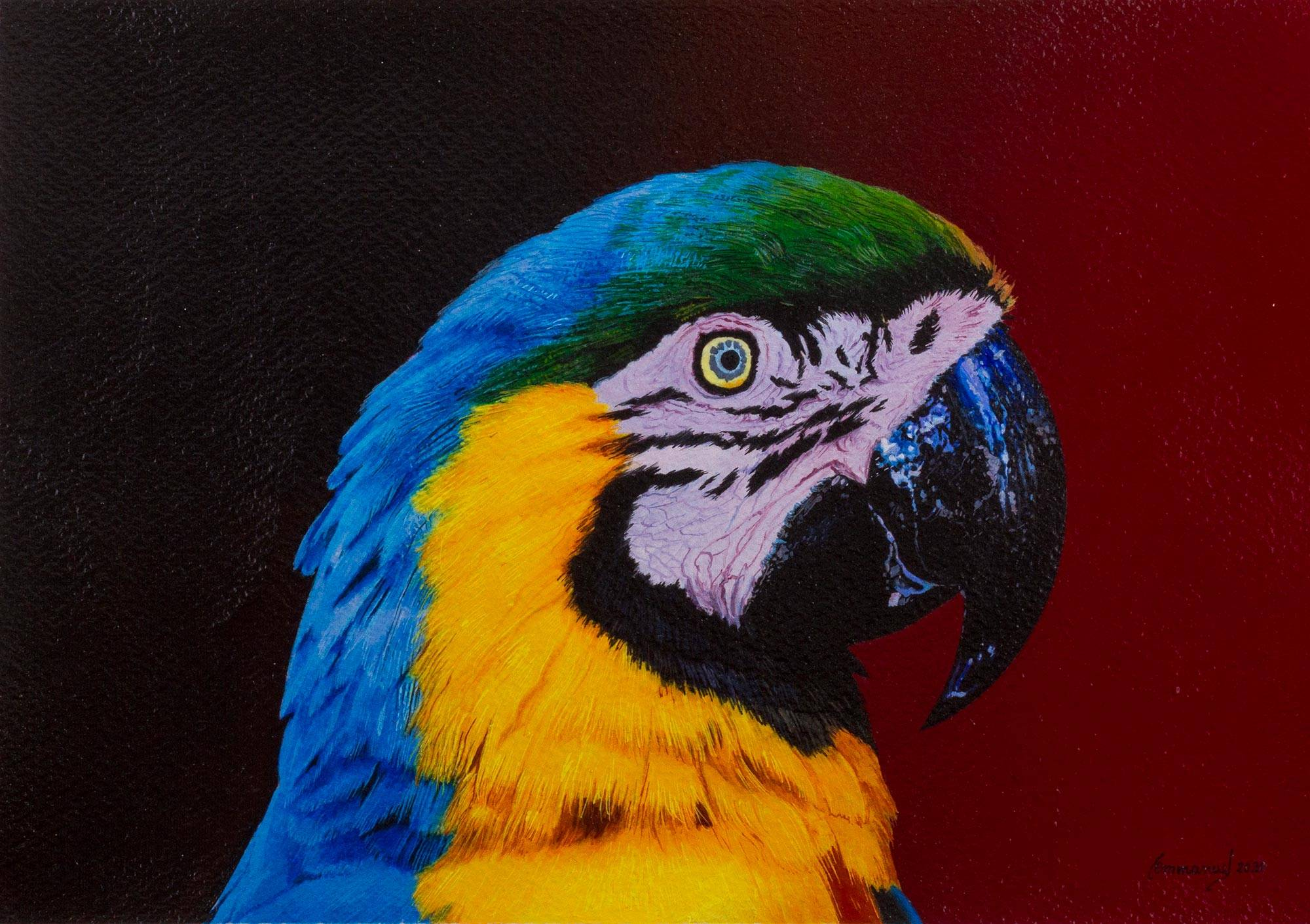 Unicef Market Original Realistic Macaw Bird Painting From Peru Sunset Of Colors