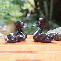 Ebony figurines, 'African Ducks' (pair) - Duo of Serene Ducks