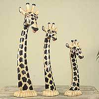 Wood sculptures, 'Giraffe Trio' (set of 3) - Set of 3 Hand Carved Giraffe Head Sculptures from Ghana