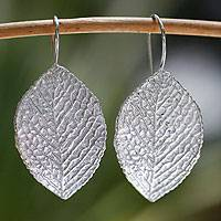 Sterling silver drop earrings, 'Sweet Acacia' - Hand Made Taxco Sterling Silver Leaf Earrings