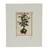 'Plant' - Signed Floral Surrealist Ink Print from Mexico (image 2a) thumbail