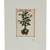 'Plant' - Signed Floral Surrealist Ink Print from Mexico (image 2b) thumbail