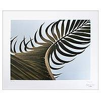 'Movement' - Mexico Palm Leaf Original Signed Color Photograph