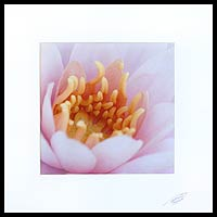 'Shades of Pink' - Floral Color Photograph