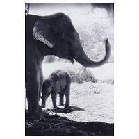 'Love You, Mom' - Mama Elephant and Calf Black and White Photograph