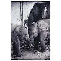 'Together' - Elephant Mama and Calves Black and White Photograph