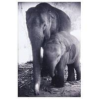 'Forever' - Mother and Baby Elephants Black and White Photograph