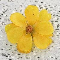 Natural cosmos brooch pin, 'Blooming Cosmos in Goldenrod' - Natural Cosmos Flower Brooch in Goldenrod from Thailand