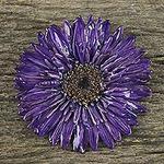 Handmade Natural Blue-Violet Gerbera Brooch from Thailand, 'Splendid Petals in Violet'
